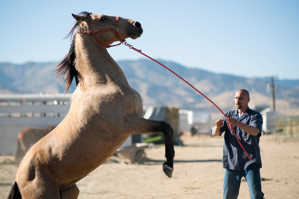 Inmate Programs that pair hard-core prisoners with recently captured mustangs. A designated inmate trains his assigned horse for an upcoming auction, the sale money funding the continuation of the Mustang project.