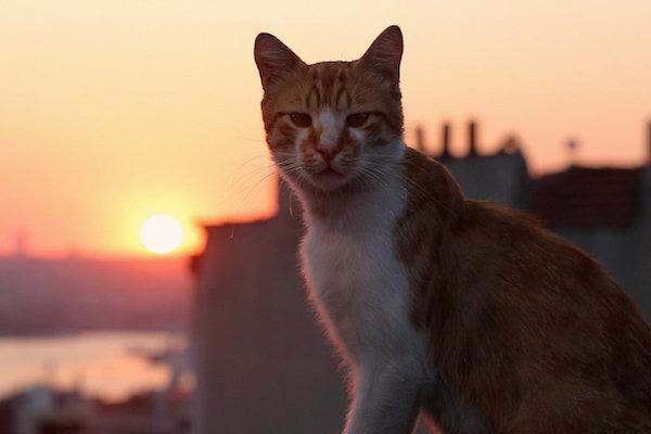 Kedi Offers Feline Philosophy In Istanbul Kdhx