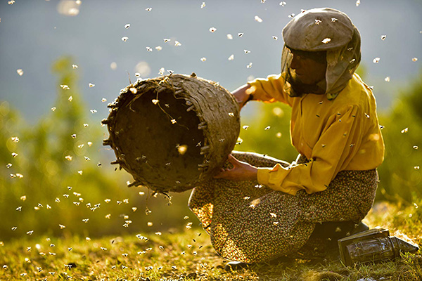 'Honeyland' present an allegory of environmental sensitivity